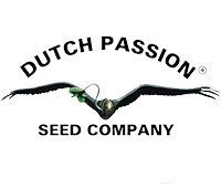 dutchpassion